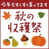 furusato_autumn.jpg