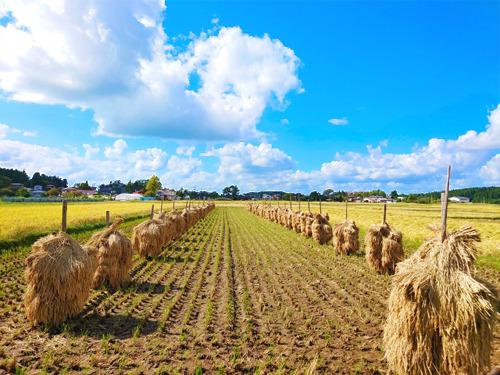 新米収穫.jpg