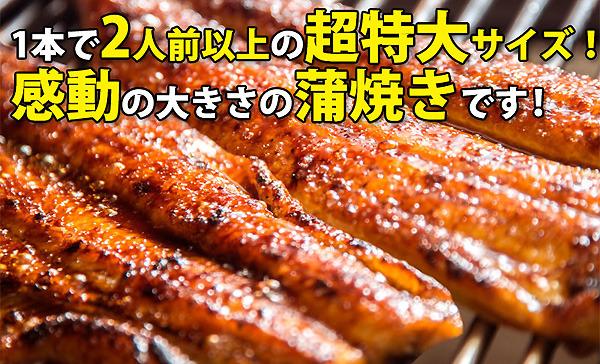 超特大国産うなぎ2本セット_和歌山県有田市.jpg